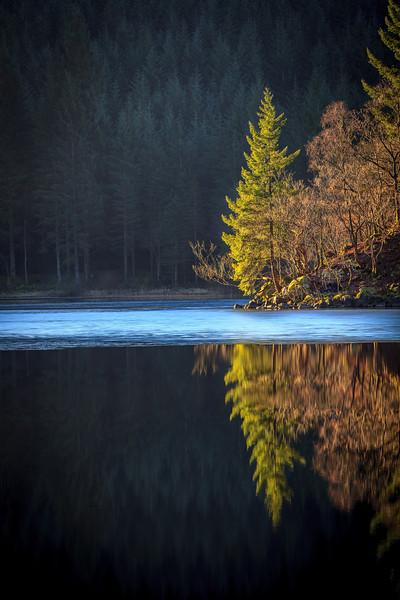 Reflected Tree Right - 8876