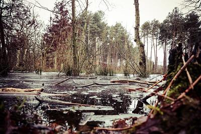 Delamere Forest 08/01/21