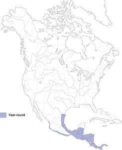 Ringed Kingfisher - Range Map
