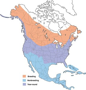 Belted Kingfisher - Range Map