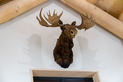 Two of the animal heads from the old Lodge are already on display at the new Lodge - creating some nifty shadows. Photo by David Kotz '86.