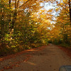 Fall foliage along the access road.