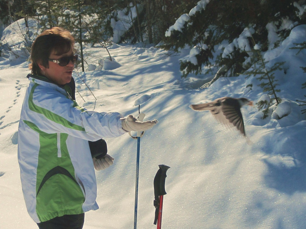 Snowshoeing and feeding the Grays Jays