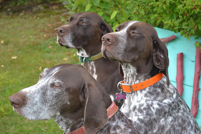 Tall Timber's three mascots, Rudy, Monty and Greta.