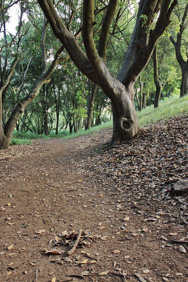 path tree