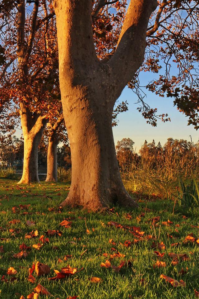 fall trees at sunrise-2-Edit