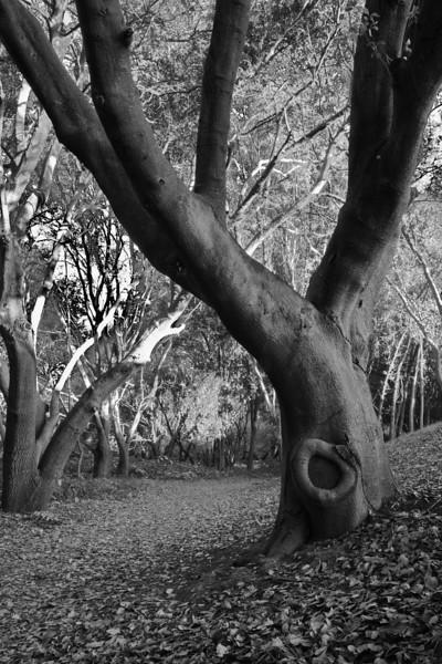 tree bw