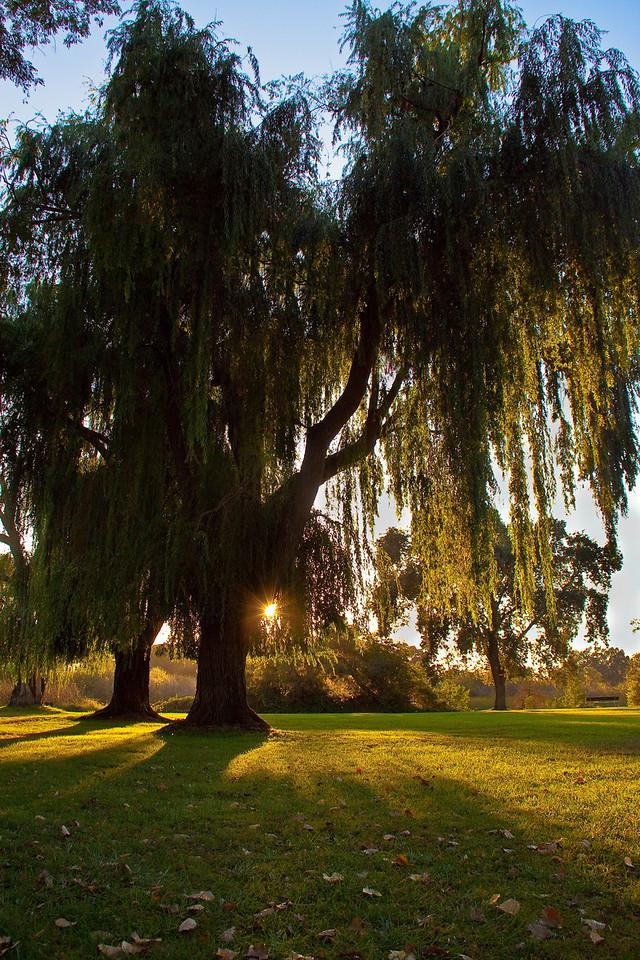 willow-Edit1