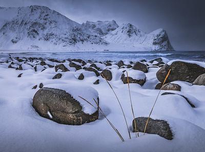 Survivor! - Unstad Beach, Lofoten, Norway