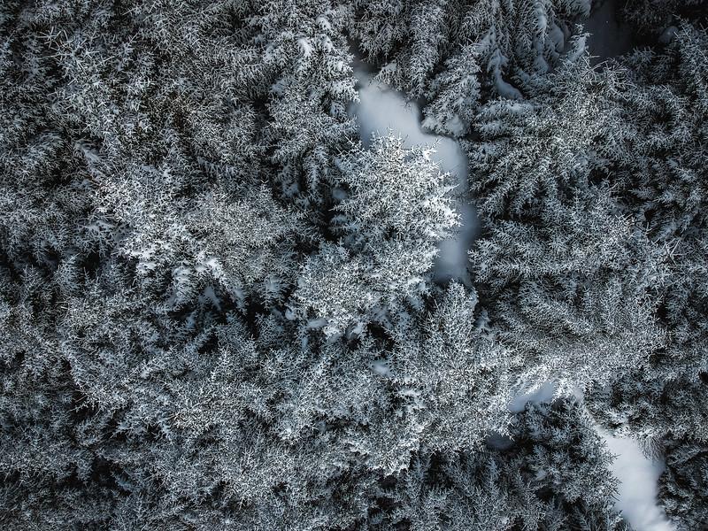 Snowy Forest Trail  - Lofoten