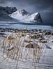Fighting the Winter! - Unstad Beach, Lofoten