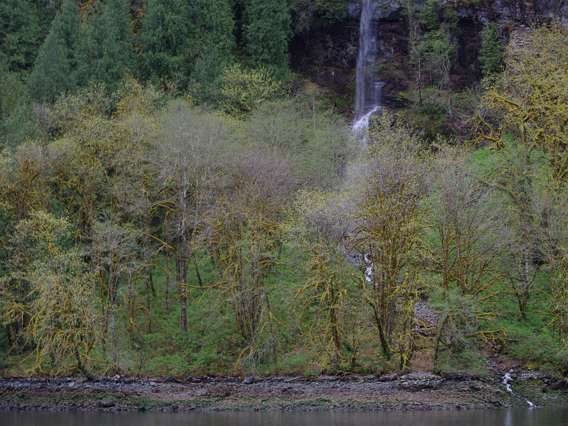 Spring growth and waterfalls in Princess Louisa Inlet.