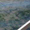 jelly fish in Porpoise Bay, Sechelt