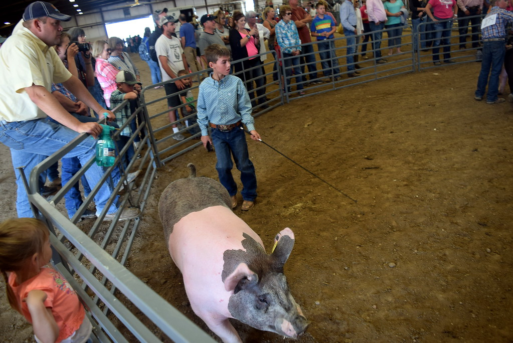 . Junior showman work their swine around the ring during the Round Robin Showmanship Contest Friday, Aug. 11, 2017, at the Logan County Fair.