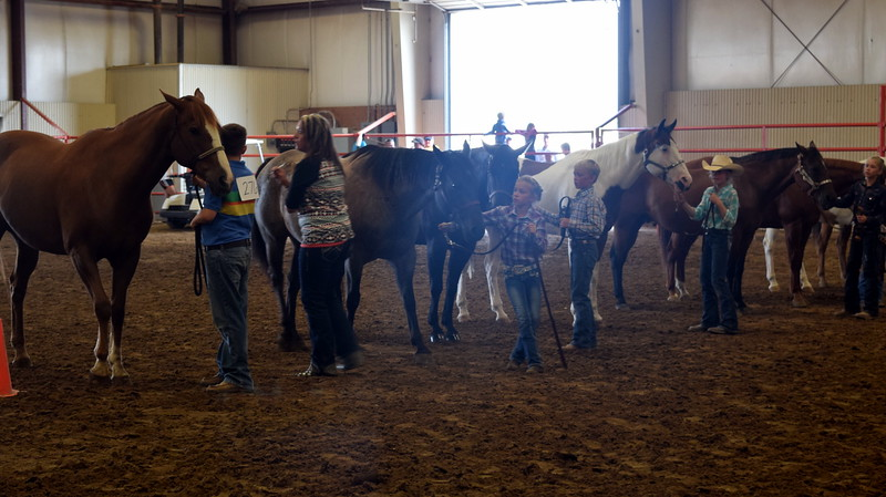Junior showman hold onto their horses as the judge looks them over during the Round Robin Showmanship Contest Friday, Aug. 11, 2017, at the Logan County Fair.