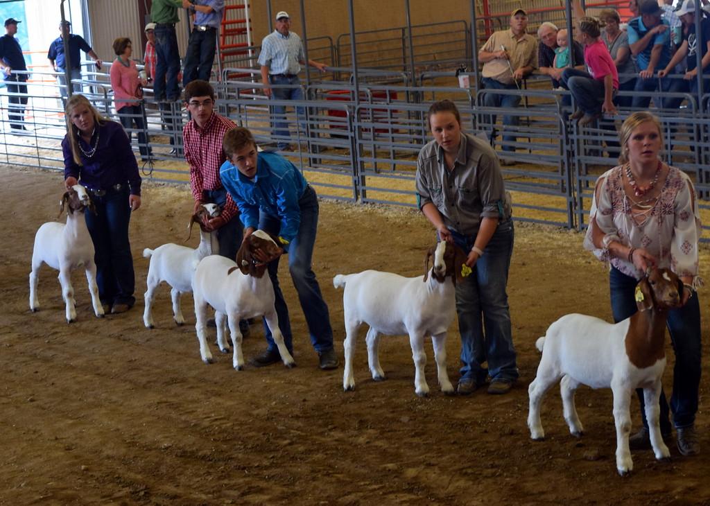 . Senior showman position their goats during the Round Robin Showmanship Contest Friday, Aug. 11, 2017, at the Logan County Fair.
