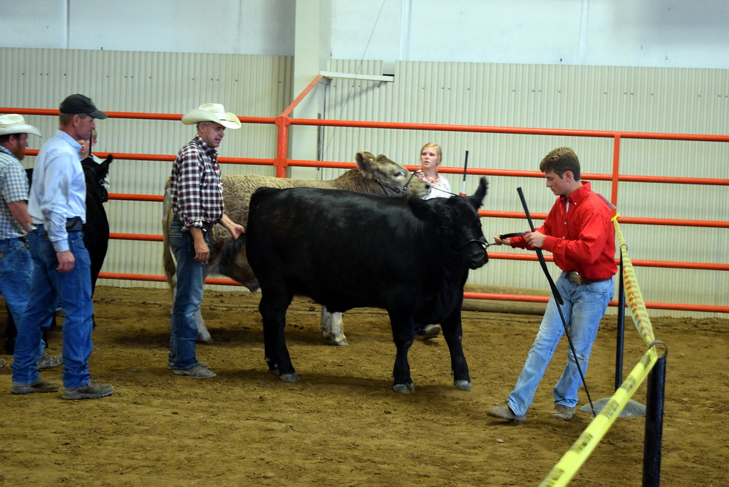 . Senior showman contestants move their animals around the ring during the Round Robin Showmanship Contest Friday, Aug. 11, 2017, at the Logan County Fair.