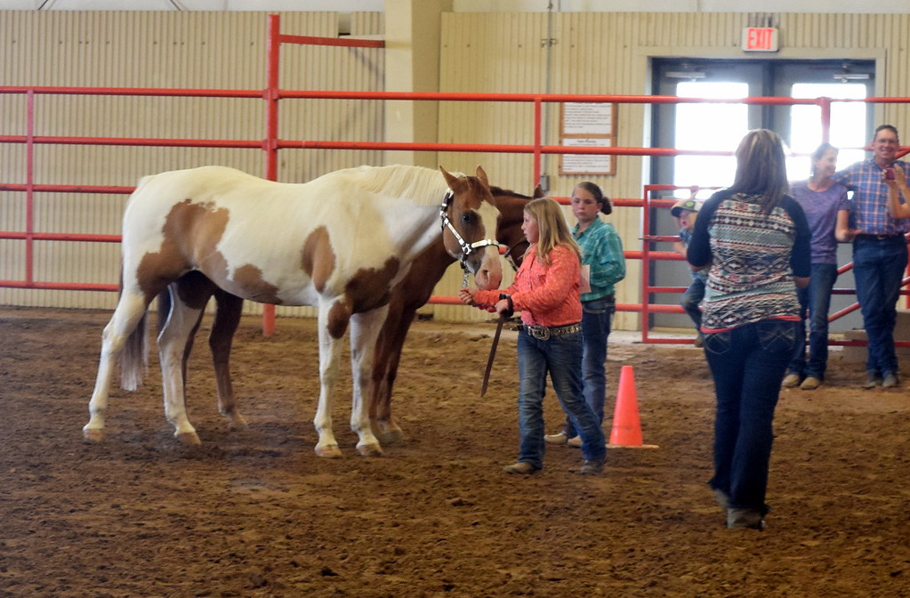 . Junior showmanship competitors lead their horses around the ring during the Round Robin Showmanship Contest Friday, Aug. 11, 2017, at the Logan County Fair.