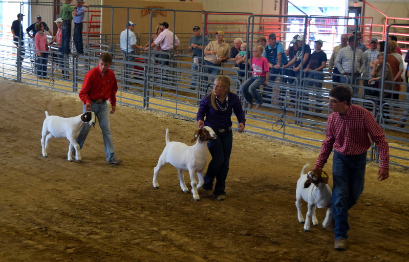 Senior showman lead their goats around the ring during the Round Robin Showmanship Contest Friday, Aug. 11, 2017, at the Logan County Fair.