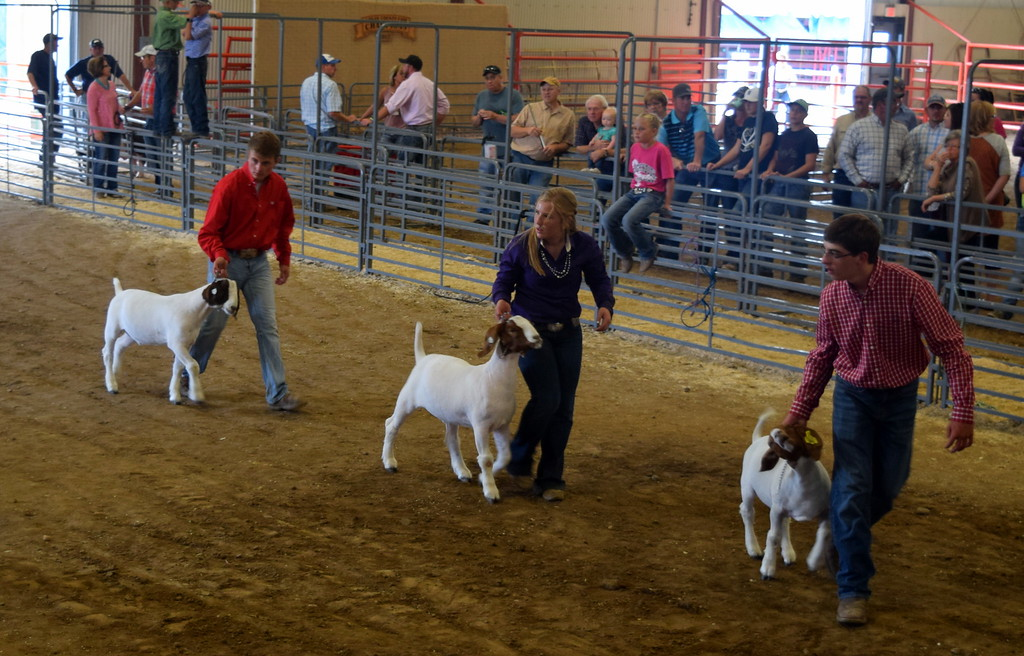 . Senior showman lead their goats around the ring during the Round Robin Showmanship Contest Friday, Aug. 11, 2017, at the Logan County Fair.