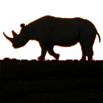 Favicon rhino