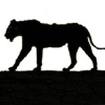 5 lions-favicon