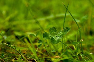 Onnenapila - Lucky clover  Lohja, 2012