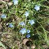tiny blue flores