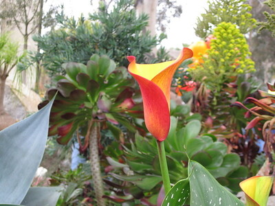 Quail Gardens, 3-21-09