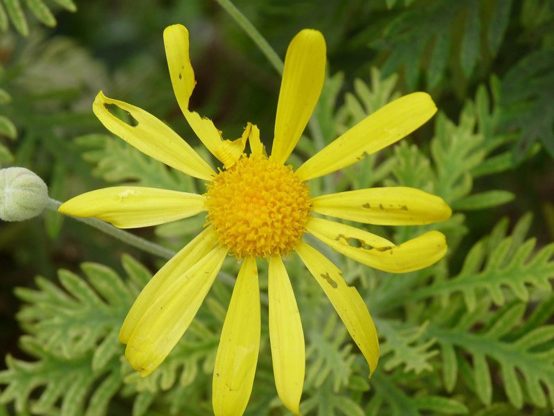 imperfect beauty, the yellow here just grabs me!