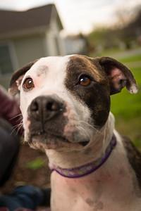 Sarah's Dog-26