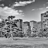 Tokyo (Tokyo Palace) - Tree & Buildings