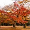Tokyo (Yoyogi Park) - Autumn's colors