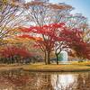Tokyo (Yoyogi) - Autumn is here