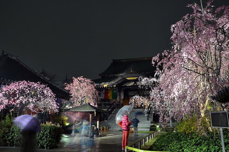 Tokyo (Itabashi) - Man in pink, temple ... and sakuras !