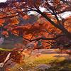 Tokyo (Rikugien garden) - Autumn's colors
