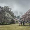 Tokyo (Shijuku Gyoen) - Sakuras under the rain !