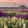 Lompoc flowers 0930-