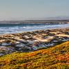 surf beach lompoc 7272
