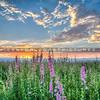 lompoc flowers_0468-