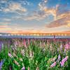 lompoc flowers-0488-