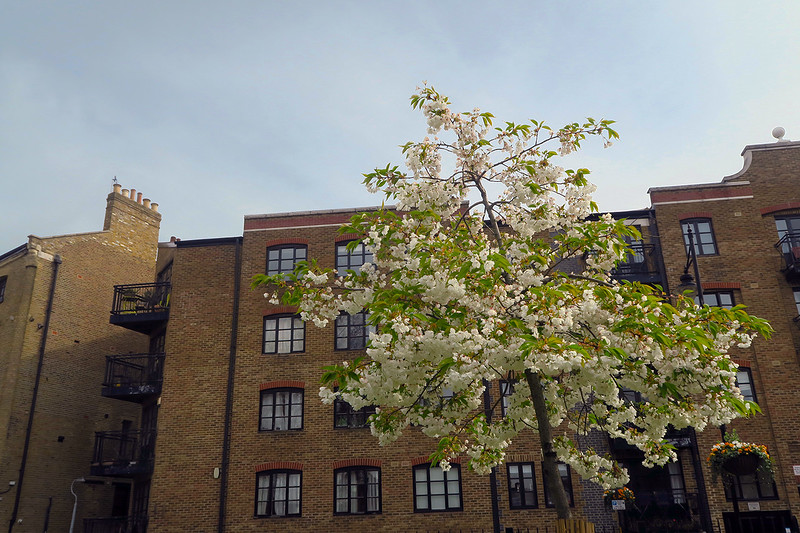 blossoms in southwark