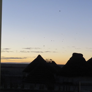 Reproduction houses in the dawn light