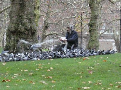 Man feeding pigeons in St. James's park