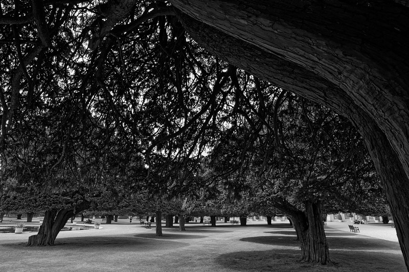 Under the shady yews of the Fountain Garden (b/w)