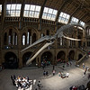 Hope the blue whale hovering above NHM visitors