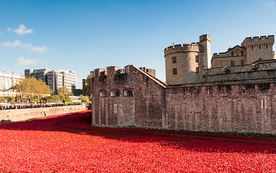 London - Poppies at the Tower of London