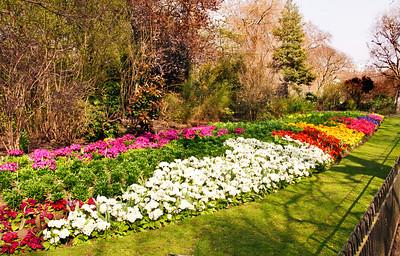 Spring Flowers in St James Park, London