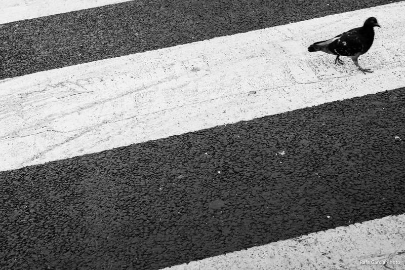 Dove crossing
