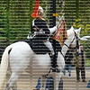 The Queen's horse guards at Buckingham Palace, white horse